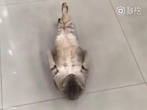 猫の腹筋01