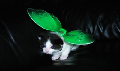 猫コスプレ11