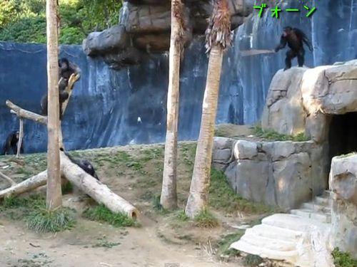 ちゃんばらチンパンジー00