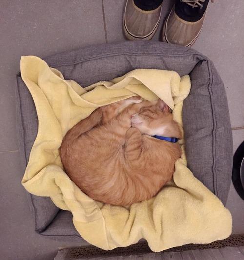 公園で保護した猫の半年後07