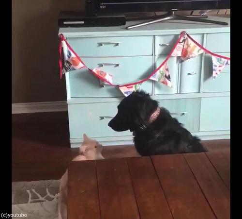 猫が犬に大胆な愛の告白03