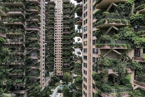 中国の「垂直の森」01