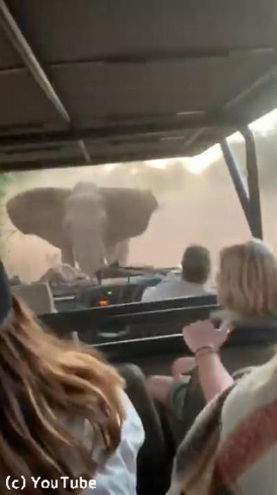 観光客を乗せた車に…ゾウが突進してきた!01
