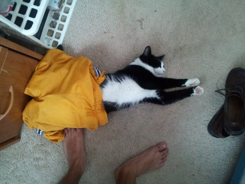 どこでも寝る猫たち07