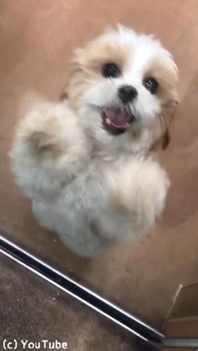 ペットホテルに預けられていた犬、飼い主を見つけた瞬間…04