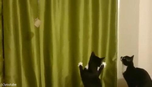 魔法を使いたい猫06