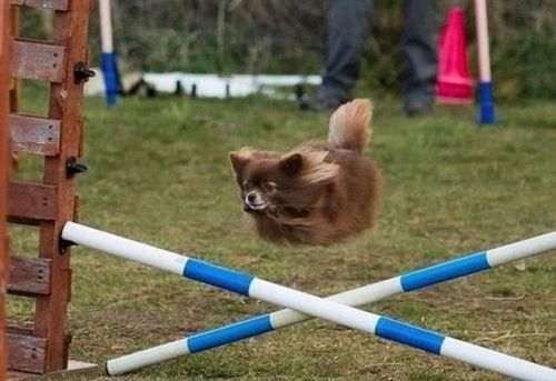犬の決定的写真07