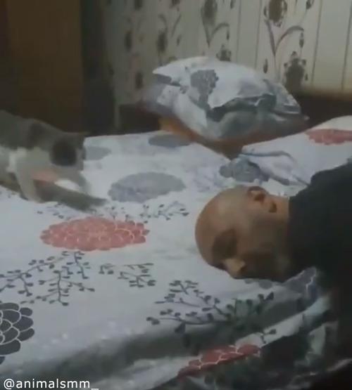 「遊んでニャ—」子猫の可愛すぎるアピール01