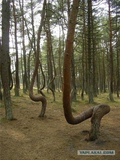 ロシアの踊る森03