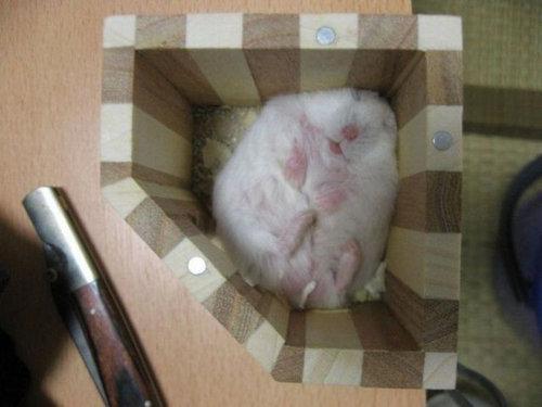 06箱や入れ物に収まった動物たち