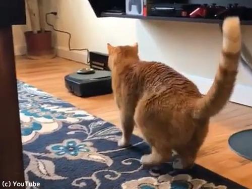 ルンバVS猫(勝者ルンバ)00