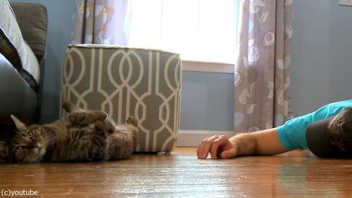 猫の前で死んだふり08