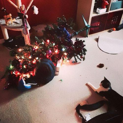 クリスマスとペット16