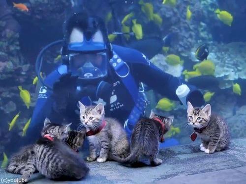 ジョージア水族館を訪れた子猫たち00