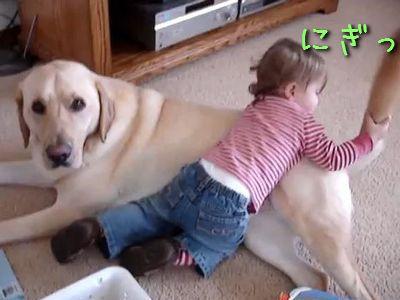 仲良しの犬と赤ちゃん