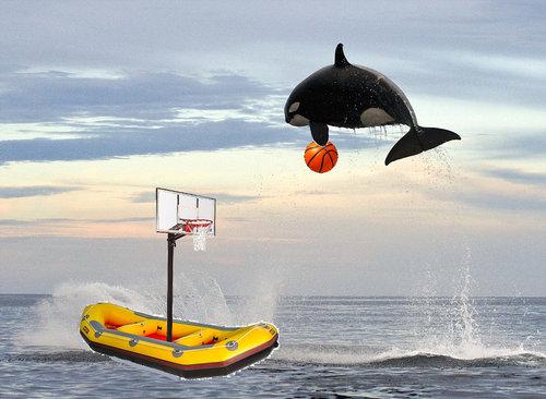 イルカを襲うシャチ06