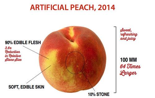 果物がどれだけ品種改良されたのか12