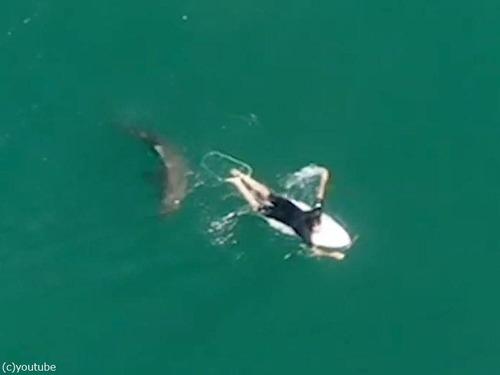 ドローンの警告でサメを回避したサーファー04