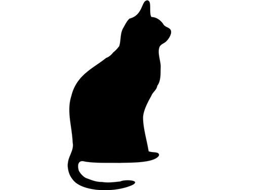 名前を呼んでも反応しない猫