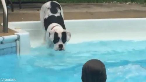 子どもたちから水遊びを教わるワンちゃん01