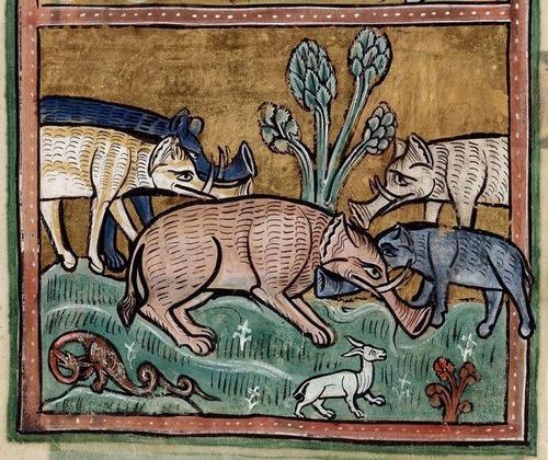 中世の想像で描かれたゾウ07