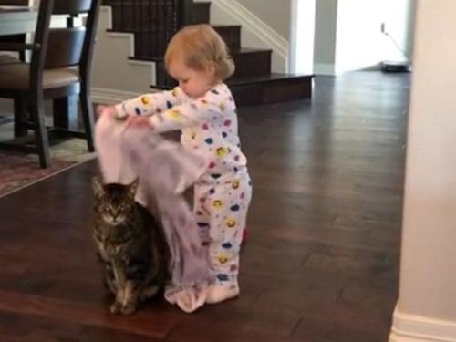 猫「もうこれがオレの人生」