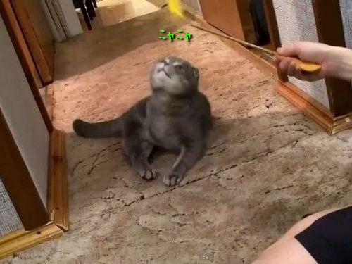 来客に礼儀正しい猫