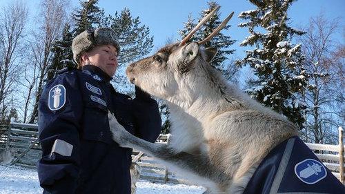 フィンランドには警察トナカイ02