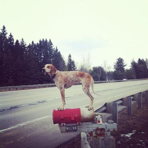どこにでも立つ犬05