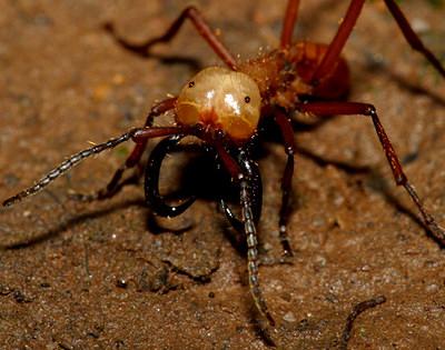 世界で最も危険な恐ろしい虫4-1