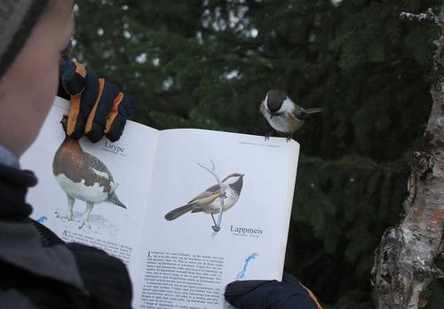 自分のページに止まった鳥02