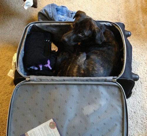 飼い主が旅行に行くことに気付いたペットたち08