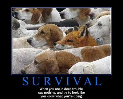 サバイバルの犬に囲まれたキツネ