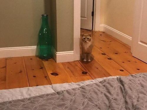 猫が見つめてくる04