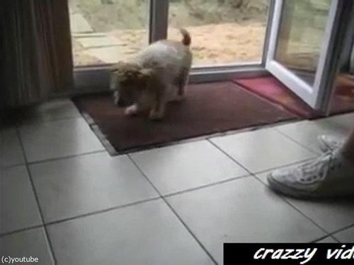 肉球をキレイキレイする犬01