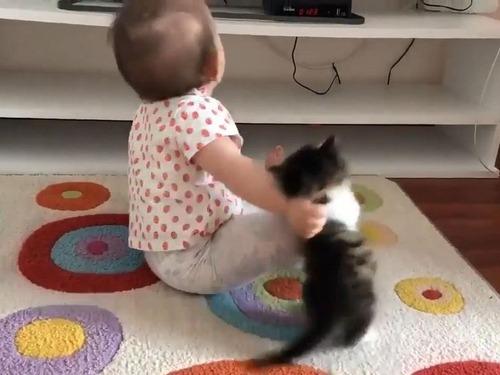 子猫が赤ちゃんに挑む02