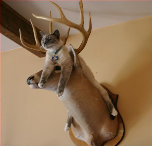 鹿と猫13