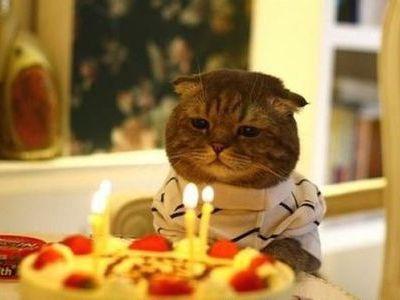 ハッピバースデーな猫00