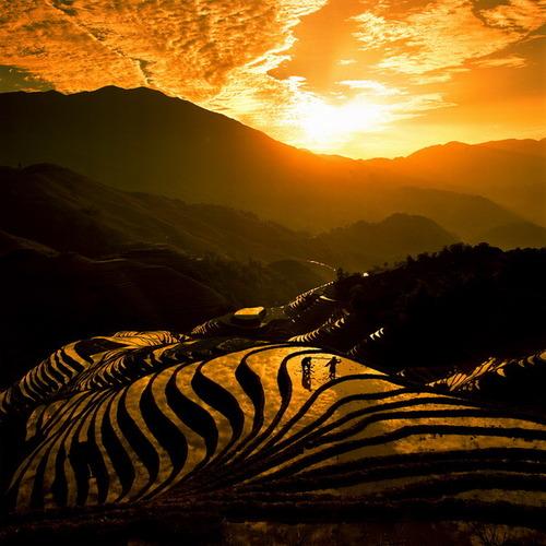 絵画みたいな中国の田んぼ07