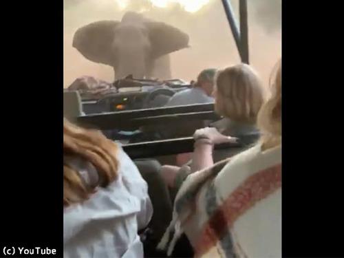 観光客を乗せた車に…ゾウが突進してきた!00