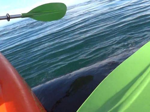 カヤックを漕いでたらクジラの上に乗った01