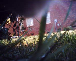 ネコ視点ではこう見える!ネコにカメラをつけて撮影01