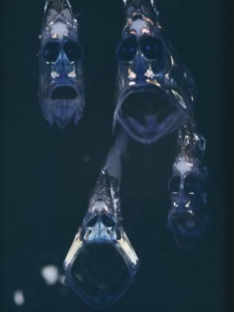 深海の生き物07