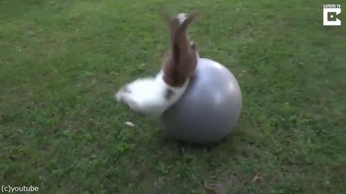 子ヤギにバランスボールを与えた結果02