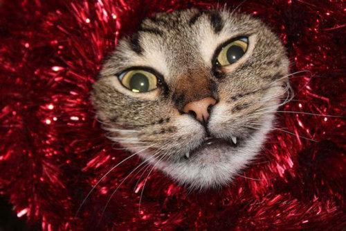 クリスマスとペット07
