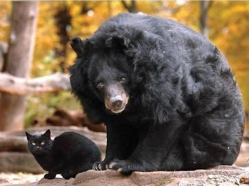 クマのお母さん01