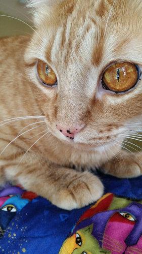 この猫の目がすごい03