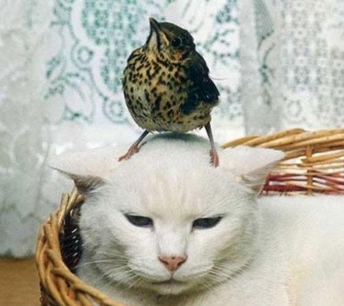 鳥と彼の勇敢な馬