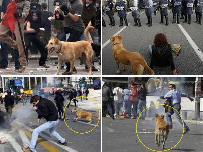 ギリシャの暴動犬00