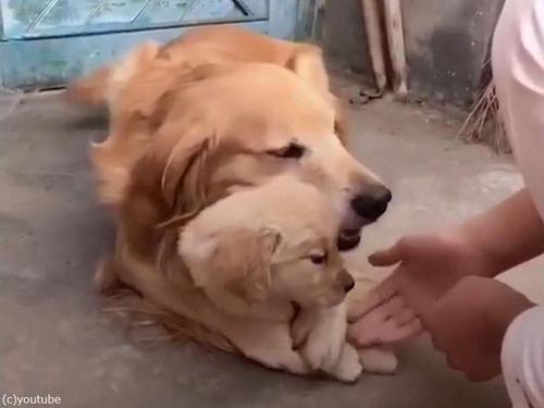 娘を溺愛するパパ犬02